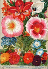 Rare Flowers, Vegetables, and Fruits. John Lewis Childs 1897.