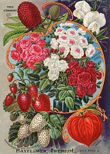 Childs 1898 Rare Flowers Vegetables and Fruits. John Lewis Childs 1898.