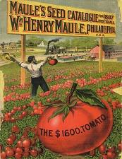 The $1600 Tomato