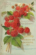 Royal church red raspberry