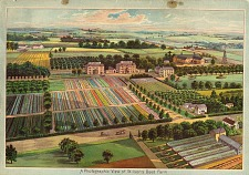 A photographic view of Wilson's seed farm