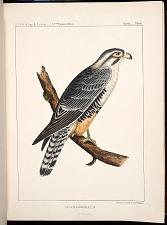 Birds--Plate I