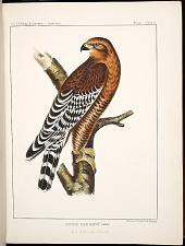 Birds--Plate II