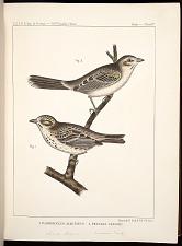 Birds--Plate IV