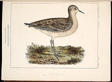 Birds--PlateVI