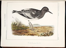 Birds--Plate VII