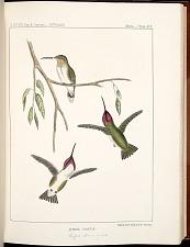 Birds--Plate XIX
