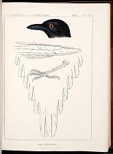 Birds--Plate XXV