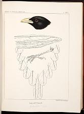 Birds--Plate XXVI