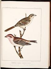 Birds--Plate XXVII