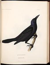 Birds--Plate XXXII