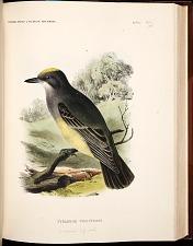 Birds-- Pl X (48)