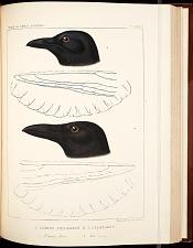 Birds--Pl LXVII