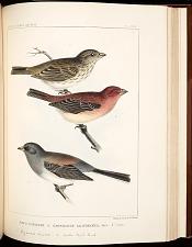 Birds--Pl LXXII