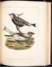 Birds--Pl LXXIV