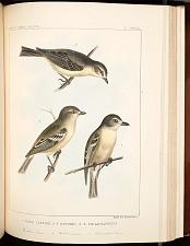 Birds--Pl LXXVIII