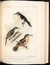 Birds--Pl LXXXIII