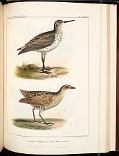 Birds--Pl LXXXIX