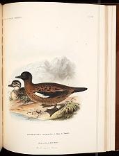Birds--Pl XCII