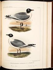 Birds--Pl XCIII