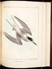 Birds--Pl XCV