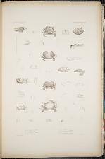 Cancroidea. Pl. 9