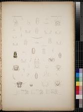 Cymothoidea. Pl. 52