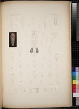 Cyclopoidea. Pl. 87