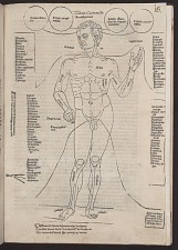 Tabula quinta de anathomia