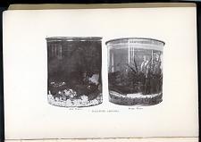 p.14 Balanced aquaria