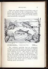 P. 9 Japanese Fantail, Japanese Fringetail, Common Gold Fish, Comet, Telescope