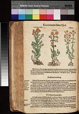 S. Johans Kraut Hypericum ; Harthew Ascyrum ; Khunrat Androsaemum