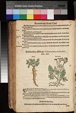 Pastenachen ; Blauw Hornungsblum (dritte) Hyacinthus minor ; Pastenachen Mören Pastinaca sativa, & sylvestris ; Mören