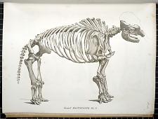 Grand Mastodonte