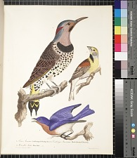 1. Picus auratus, gold-winged woodpecker. 2. Emberiza americana, black-throated bunting. 3. Motacilla sialis, blue bird, pp. 3 ff.