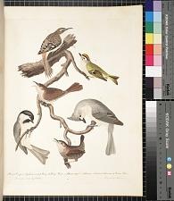 1. Brown creeper. 2. Golden-crested wren. 3. House wren. 4. Black-capt titmouse. 5. Crested titmouse. 6. Winter wren, pp. 8 ff.