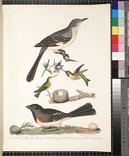 1. Mocking bird. 2. Egg. 3. and 4. Male and female humming bird, nest and eggs. 5. Towhé bunting. 6. Egg, pp. 10 ff.
