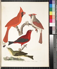 1. Cardinal Grosbeak. 2. Female & egg. 3. Red Tanager. 4. Female & egg.