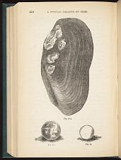 Fig. 12 a. Fig. 13. Figl 14.