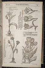 Of the Historie of Plants