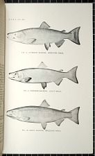 Fig. 2 - Chinook Salmon, Breeding Male. Fig. 3 - Sockeye Salmon. Adult Male. Fig. 4 - Coho Salmon. Breeding Male.