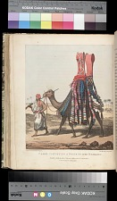 Camel Conveying a Bride to Her Husband