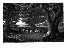 Grove of Kukui Trees, Kakuai