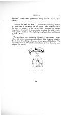 Aplodontia leporina—Skull