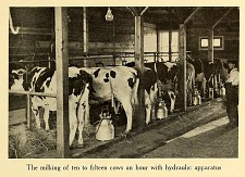 The milking of ten to fifteen cows an hour with hydraulic apparatus.