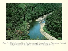 The Johnstone River flowing through the rainforest of Palmerston National Park.