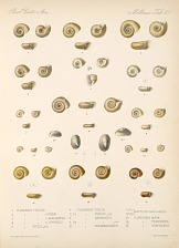Shells and Mollusks
