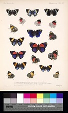 Butterflies and Moths