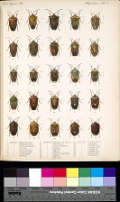 Other Insects