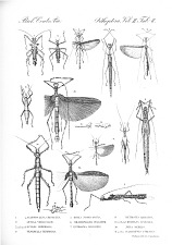 Grasshoppers and Related Insects